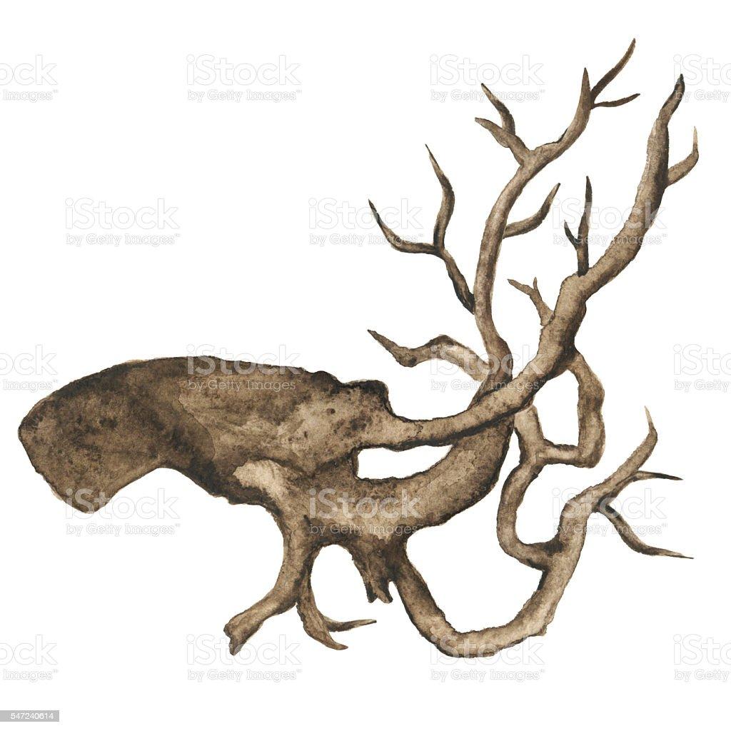 Watercolor driftwood vector art illustration