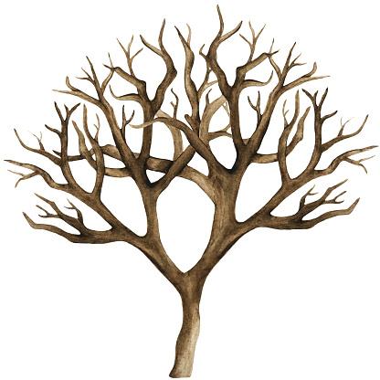 Watercolor dry tree, bare tree