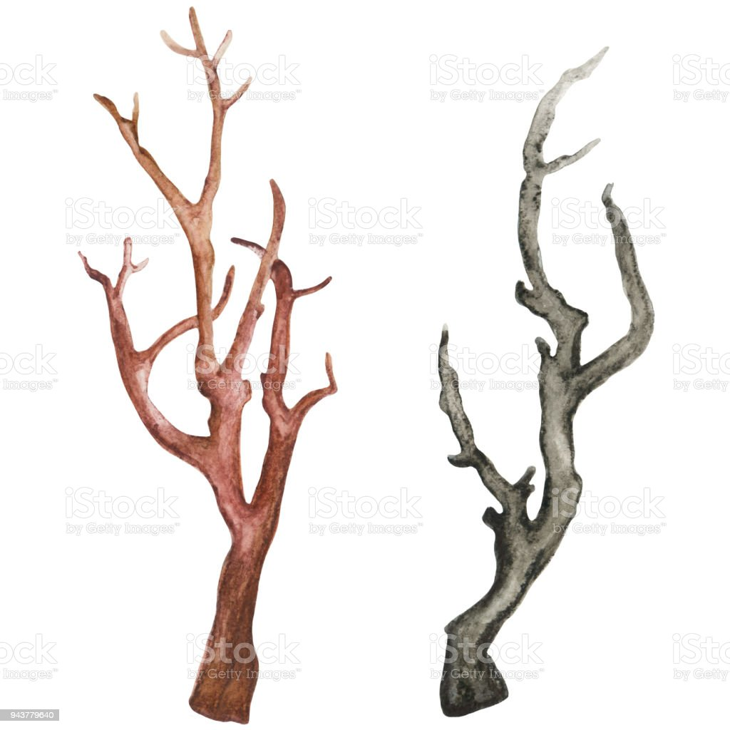 Watercolor dry tree branches vector art illustration
