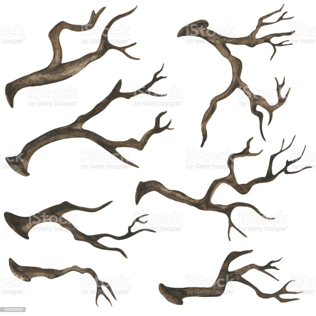 Watercolor dry tree branches, twigs vector art illustration