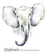 Watercolor elephant on the white background. African animal. Wildlife art illustration. Can be printed on T-shirts, bags, posters, invitations, cards, phone cases, pillows