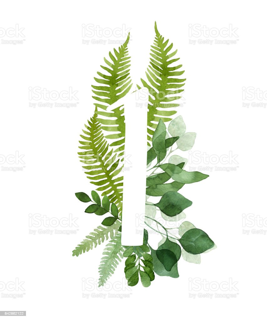 Watercolor eucalyptus and fern foliage number one. vector art illustration