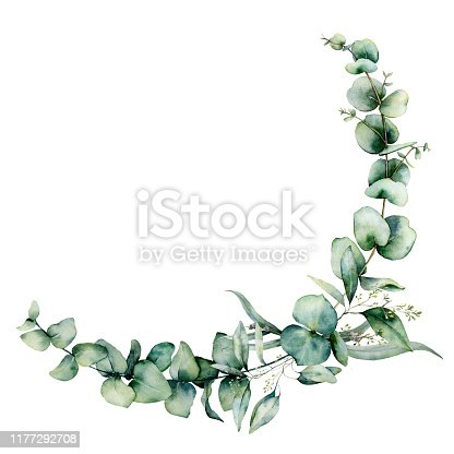 Watercolor eucalyptus border . Hand painted eucalyptus branch and leaves isolated on white background. Floral illustration for design, print, fabric or background