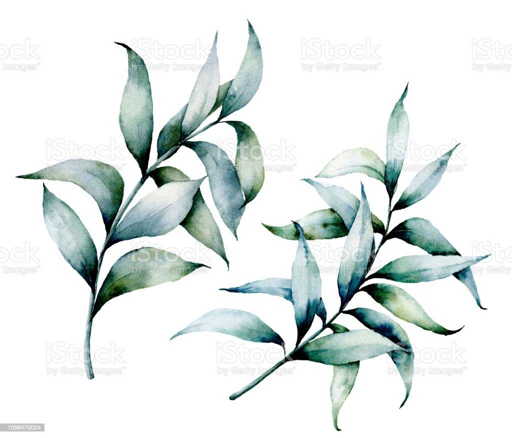 branches deucalyptus aquarelle peint à la main branches deucalyptus