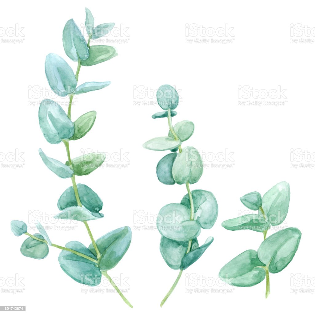 Watercolor eucalyptus set vector art illustration