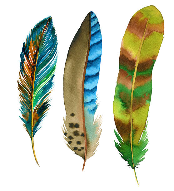 watercolor feathers vector art illustration