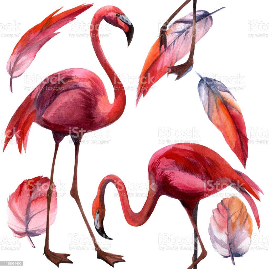 Vetores De Teste Padrão Do Flamingo Da Aguarela Pássaro