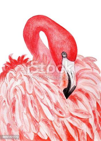 Watercolor flamingo. Tropical exotic bird.