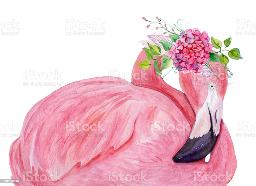 Watercolor flamingo with exotic flowers. Hand drawn illustration. watercolor flamingo with exotic flowers hand drawn illustration - stockowe grafiki wektorowe i więcej obrazów abstrakcja royalty-free