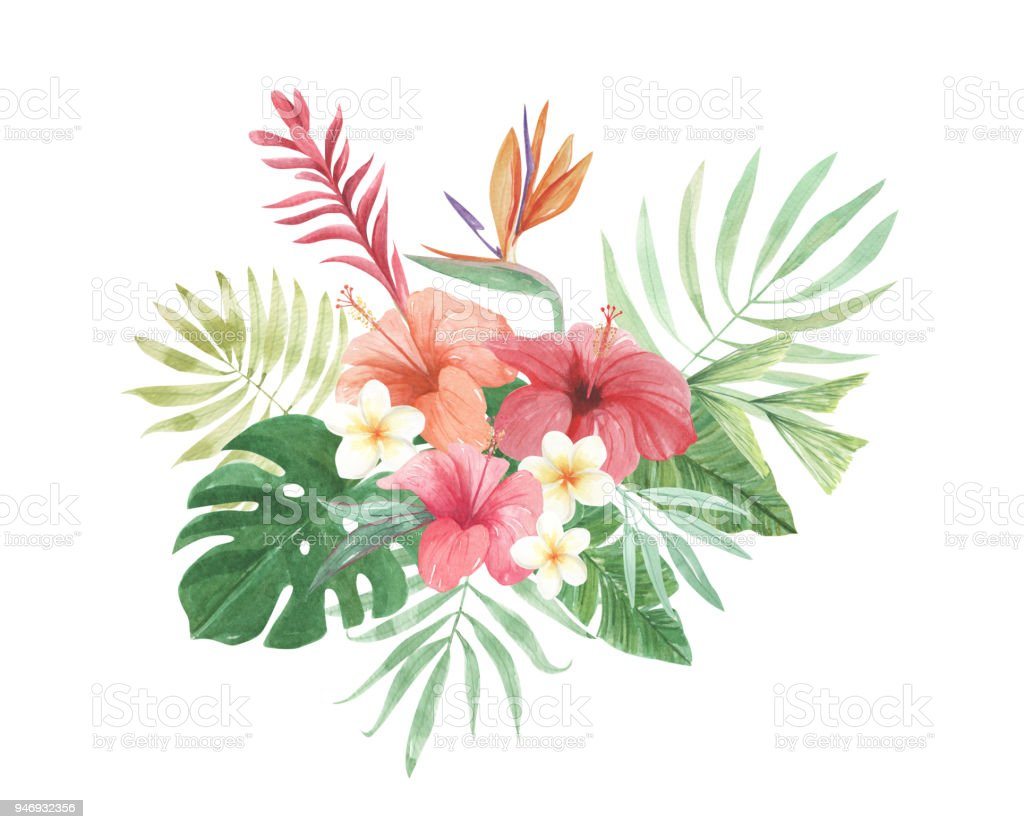 watercolor floral bird of paradise flowers leaves aloha plumeria