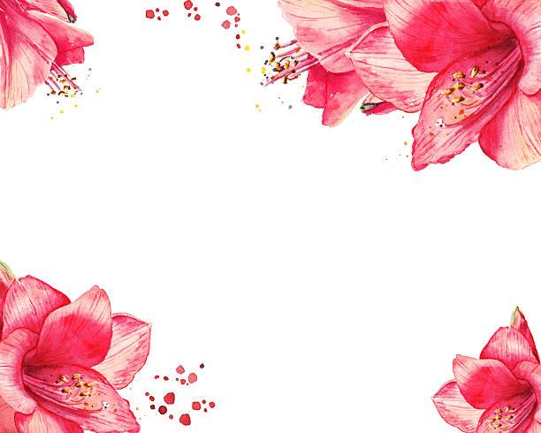bildbanksillustrationer, clip art samt tecknat material och ikoner med watercolor floral border for happy new year, christmas cards - amaryllis