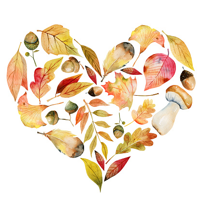 Watercolor floral heart composition of autumn elements: tree leaves, acorns, mashrooms and other plants, isolated illustration on white background