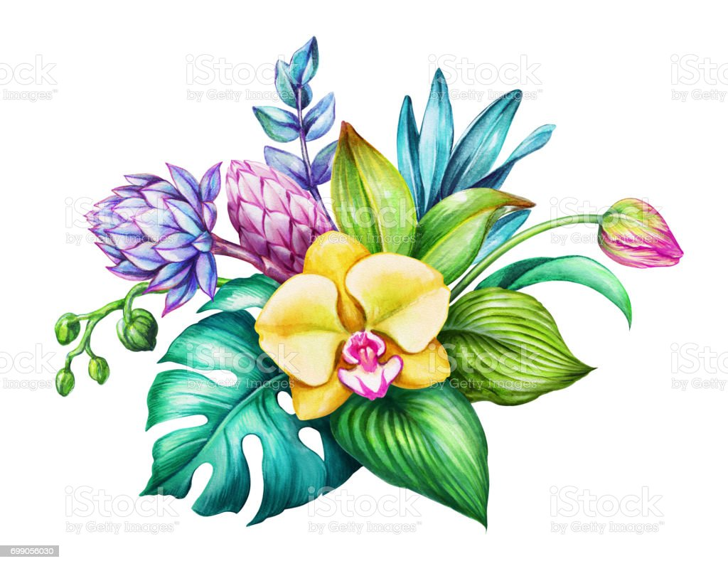 Watercolor floral illustration exotic nature tropical flowers watercolor floral illustration exotic nature tropical flowers bouquet orchid green leaves izmirmasajfo