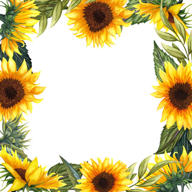Clip Art Of A Sunflower Borders Illustrations, Royalty ...