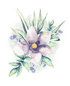 istock Watercolor Flower White background 1159090757