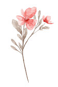istock Watercolor Flower White background 1194734674