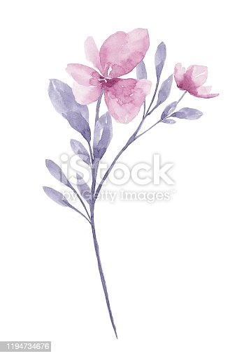 istock Watercolor Flower White background 1194734676