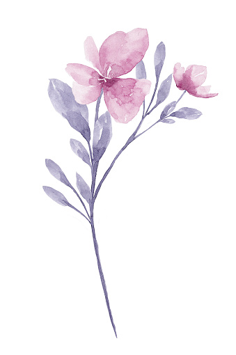 Watercolor Flower White Background Stock Illustration - Download Image Now