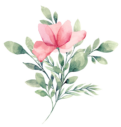 Watercolor Flower White background