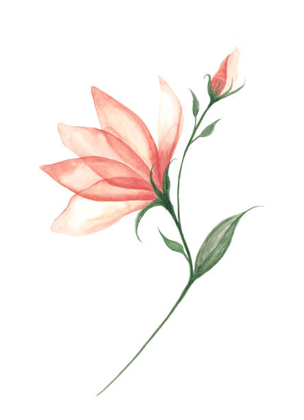 Watercolor Flower White background Watercolor Painting, Acrylic Painting, Drawing - Activity, Painted Image, Watercolor Paints fabric swatch stock illustrations