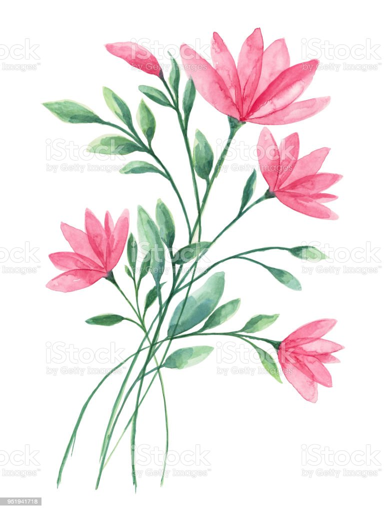 Watercolor Flower White Background Stock Vector Art More Images Of