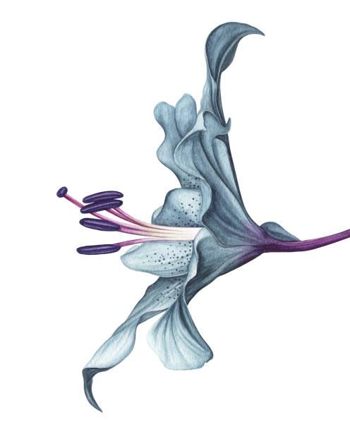ilustrações de stock, clip art, desenhos animados e ícones de watercolor flower white background - flower white background