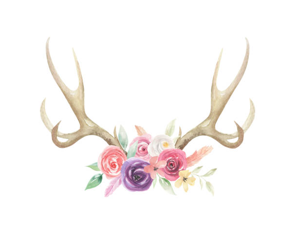 watercolor flowers florals antlers deer stag horns bone painted - deer antlers stock illustrations, clip art, cartoons, & icons