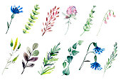 Hand drawn watercolor illustrations isolated on white background. Field flowers and plants. Botany floral design elements