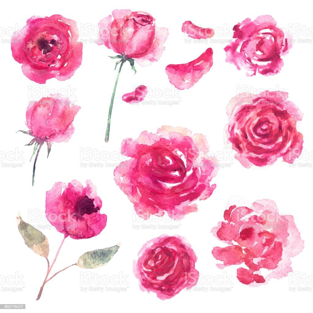Watercolor flowers, petals vector art illustration