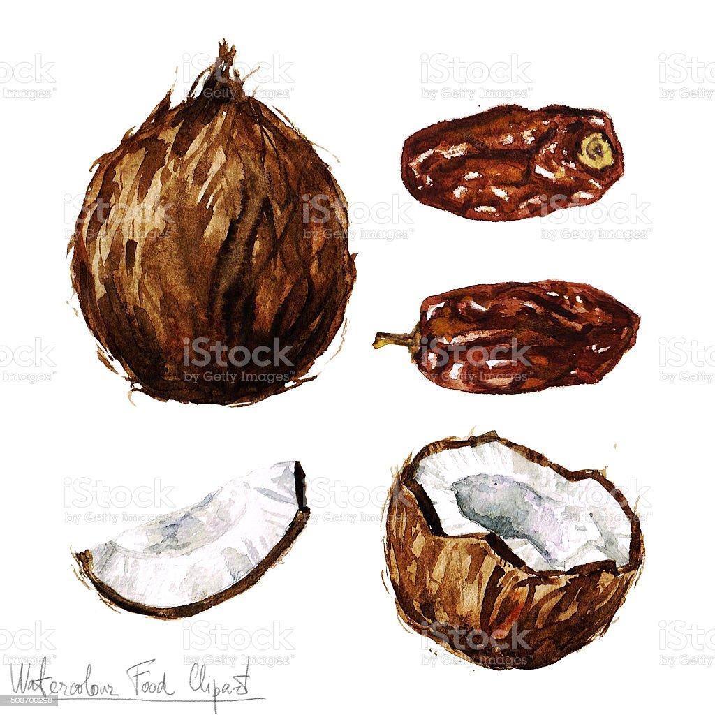 Acuarela comida imágenes prediseñadas-Coconut y fecha - ilustración de arte vectorial