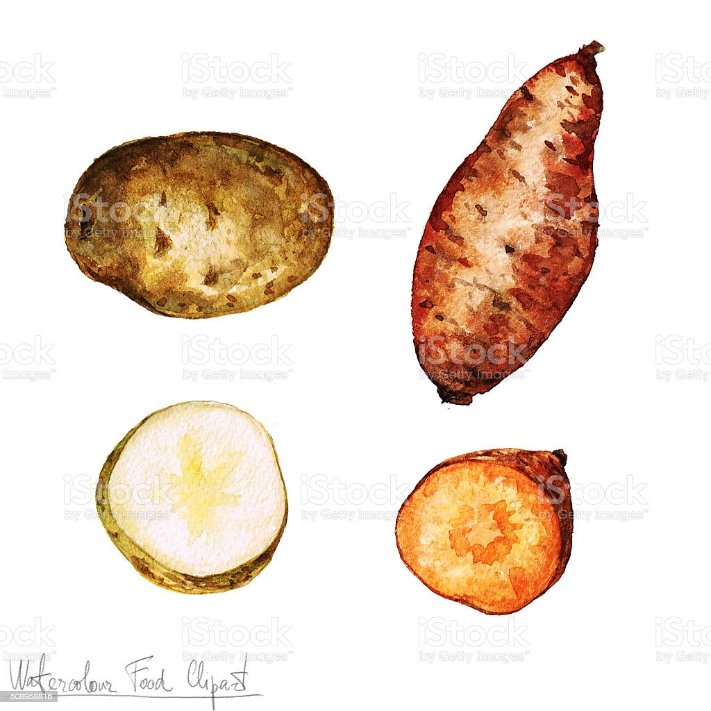 Watercolor Food Clipart - Potato isolated vector art illustration