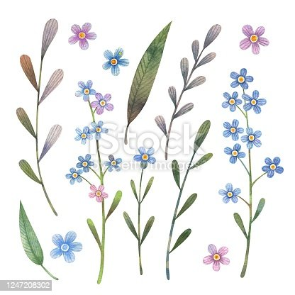 istock Watercolor forget-me-not flowers set. 1247208302