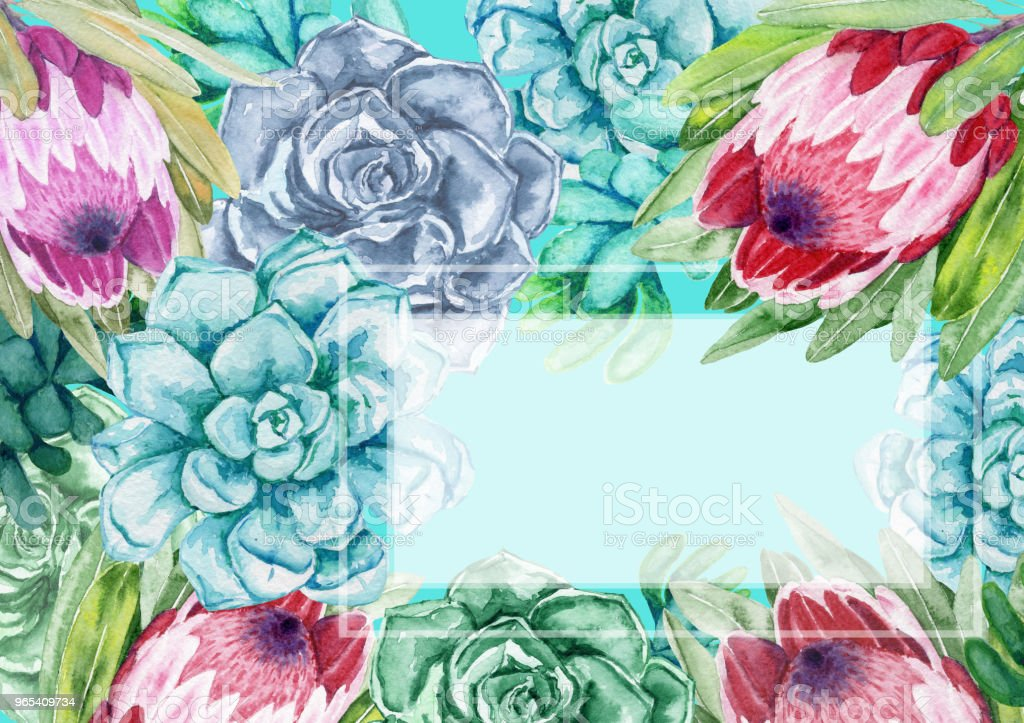 Watercolor frame. Succulents with protea flowers. Color cacti. royalty-free watercolor frame succulents with protea flowers color cacti stock vector art & more images of art