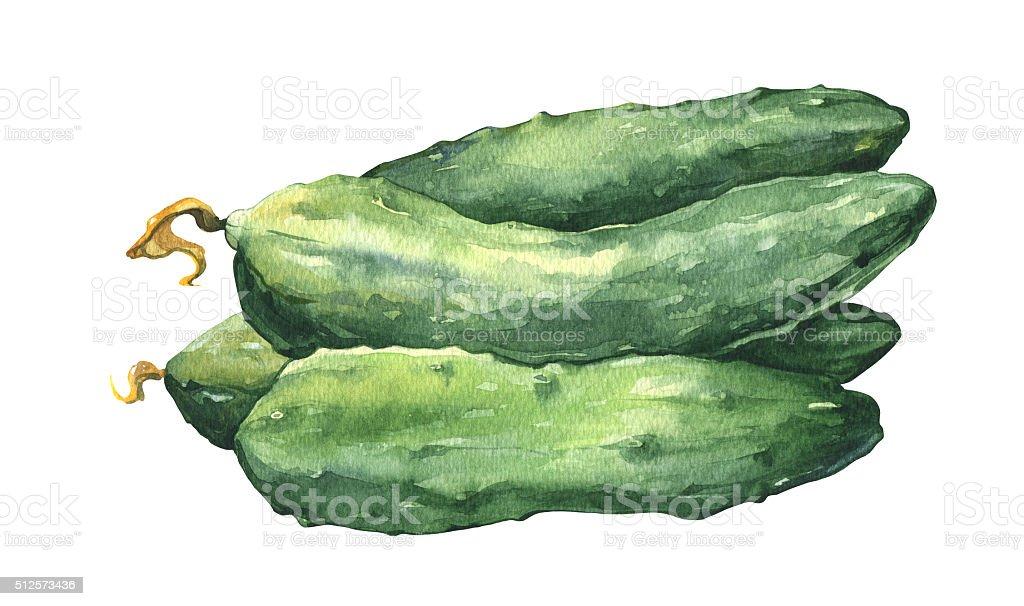 Watercolor fresh cucumbers vector art illustration