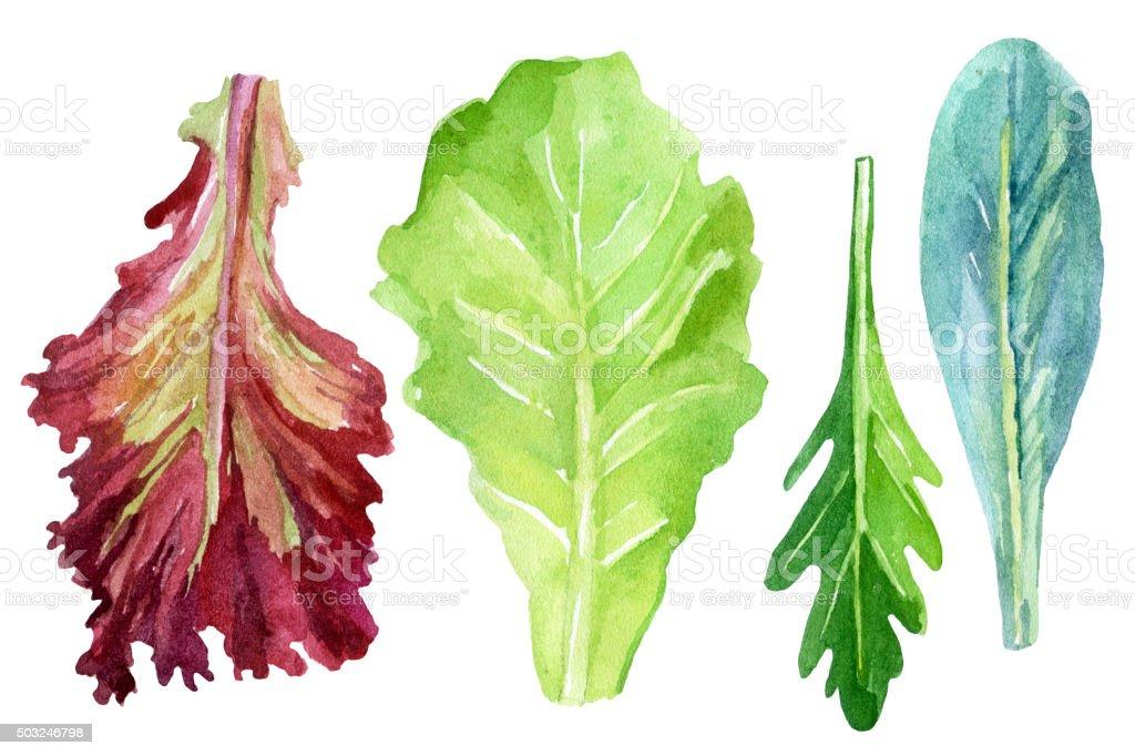 Watercolor fresh greens set vector art illustration