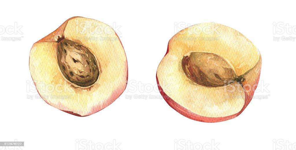 Watercolor fresh ripe peaches vector art illustration