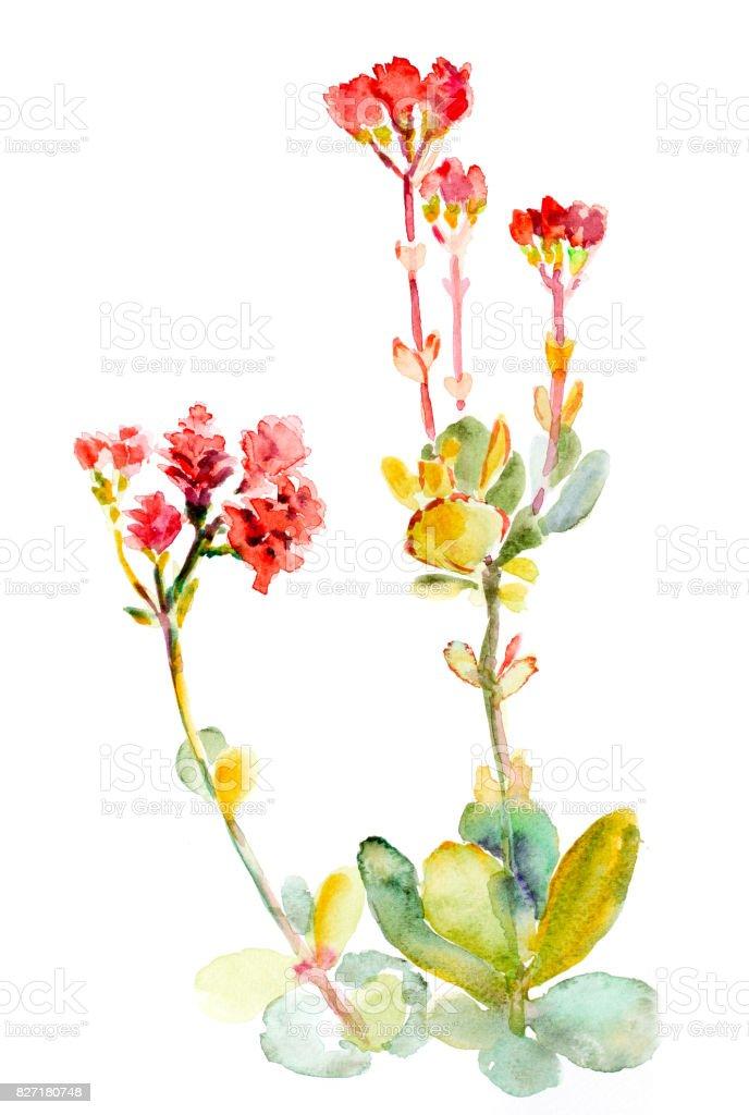 Ilustración De Flores Y Frutas Acuarela Y Más Vectores