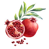 watercolor fruit pomegranate on white background