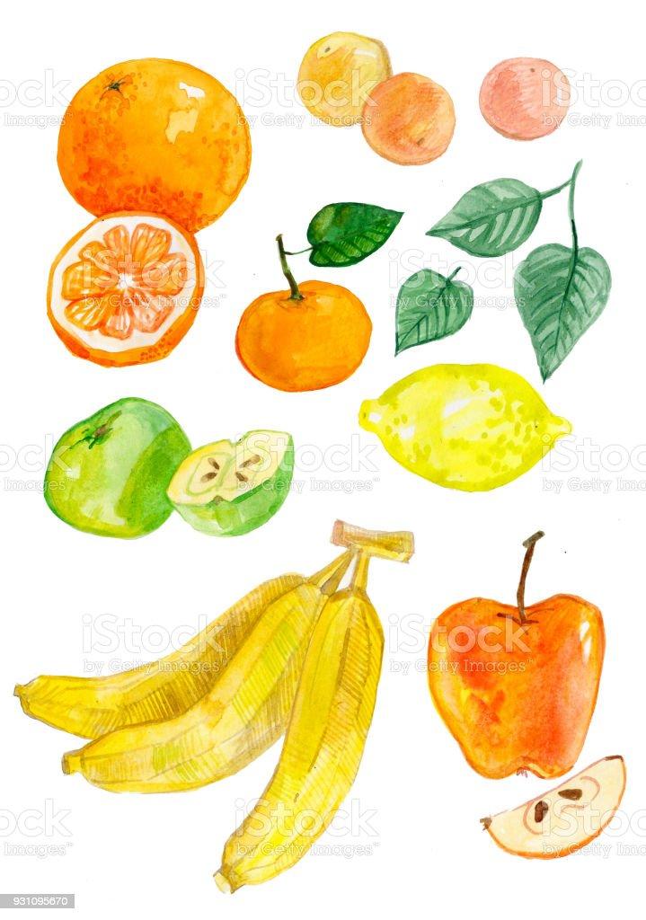 Ilustración de Acuarela De Cuajado Cítricos Limones Naranjas ...