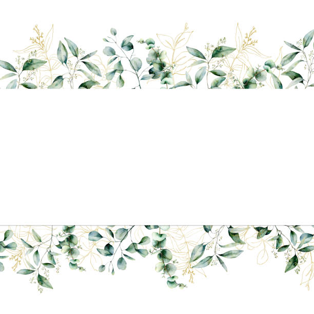 Watercolor gold eucalyptus seamless banner. Hand painted eucalyptus branch and leaves isolated on white background. Line art floral illustration for design, print, fabric or background. Watercolor gold eucalyptus seamless banner. Hand painted eucalyptus branch and leaves isolated on white background. Line art floral illustration for design, print, fabric or background lush foliage stock illustrations
