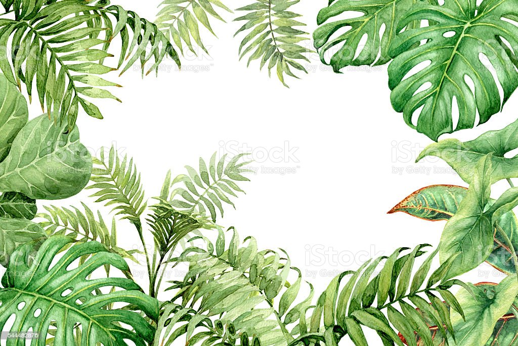 Watercolor green background with tropical plants - ilustración de arte vectorial
