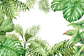Watercolor green background with tropical plants