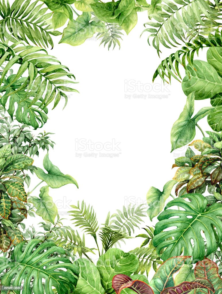 Watercolor green background with tropical plants vector art illustration