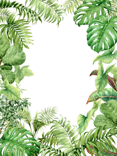 Watercolor green background with tropical plants Hand drawn  branches and leaves of tropical plants. Natural green background with space for text. Watercolor rectangle vertical floral frame. amazon stock illustrations