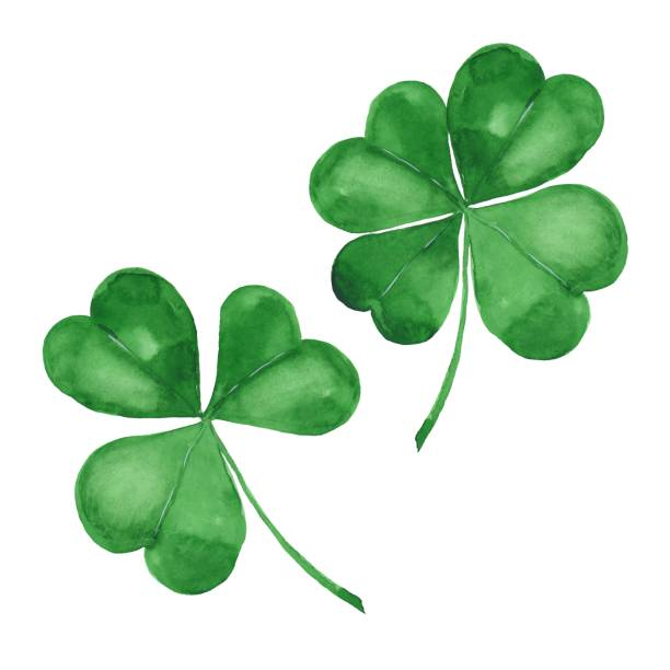 Watercolor green clover Watercolor clover. Green four leaf clover isolated on white shamrock stock illustrations