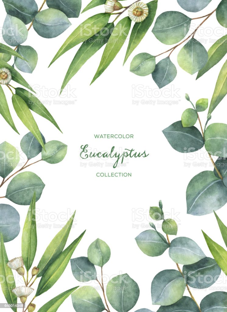 Watercolor green floral card with eucalyptus leaves and branches isolated on white background. vector art illustration