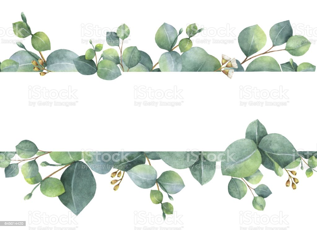Watercolor green floral card with silver dollar eucalyptus leaves and branches isolated on white background. vector art illustration