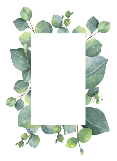 watercolor green floral card with silver dollar eucalyptus leaves and branches isolated on white background. - floral frames stock illustrations, clip art, cartoons, & icons