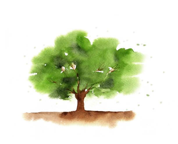 illustrazioni stock, clip art, cartoni animati e icone di tendenza di albero verde acquerello - forest bathing