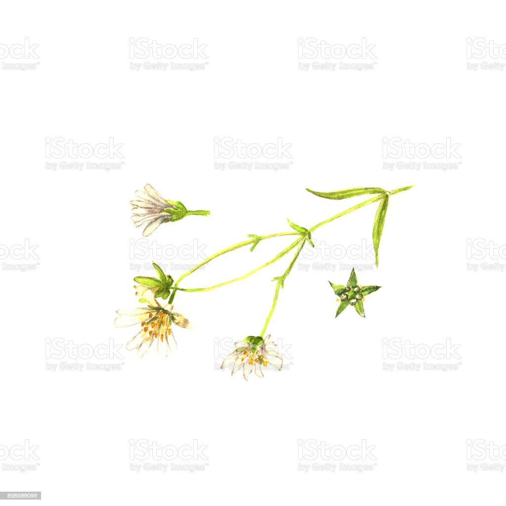 Watercolor green weeds. Composition of silhouettes of wild plant on white vector art illustration